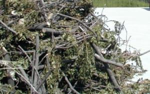 Spostamento ramaglie e verde