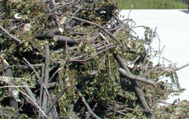 Cormons - Gorizia - Spostamento ramaglie e verde